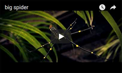 Digital Mixes spider video