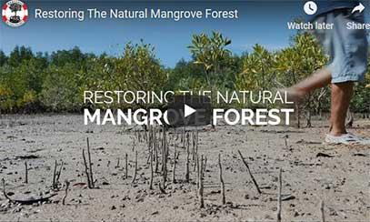 Mangrove Action Project - Digital Mixes