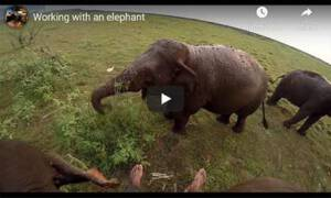 Elephant Back Sound